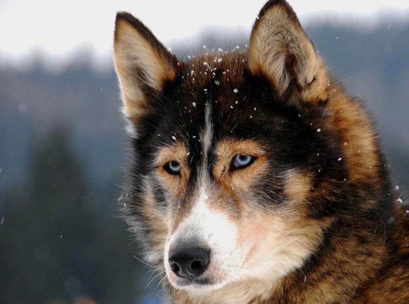 cane-sente-freddo