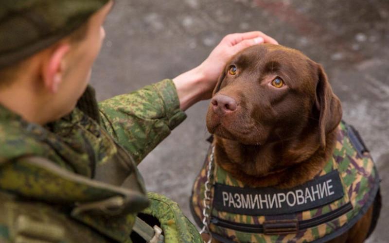 giubbotto-antiproiettile-per-cani