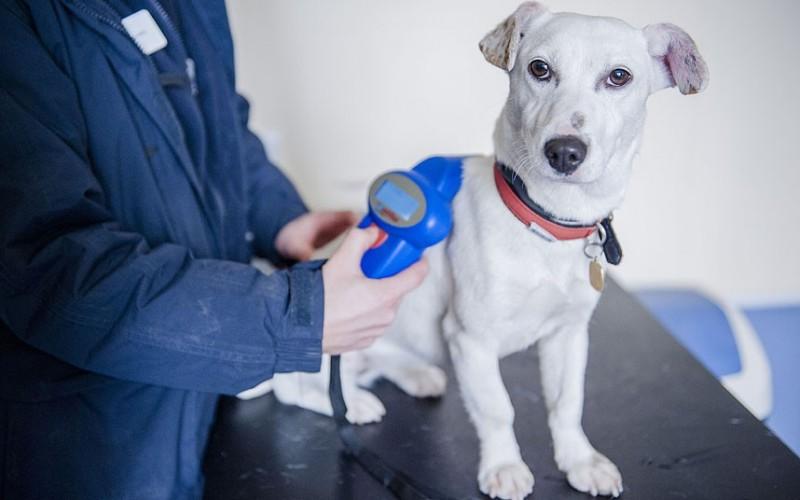 Microchip per il cane: tutte le informazioni utili