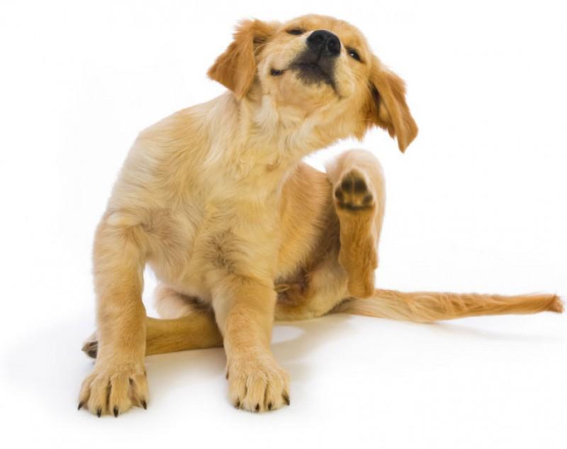 Perché il mio cane si gratta continuamente?