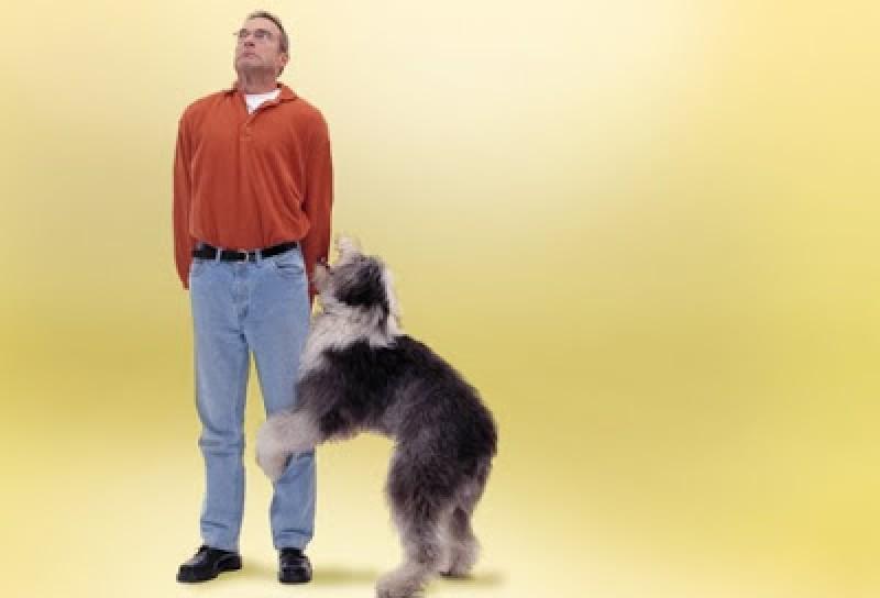 Perché il cane monta? 3 motivi frequenti