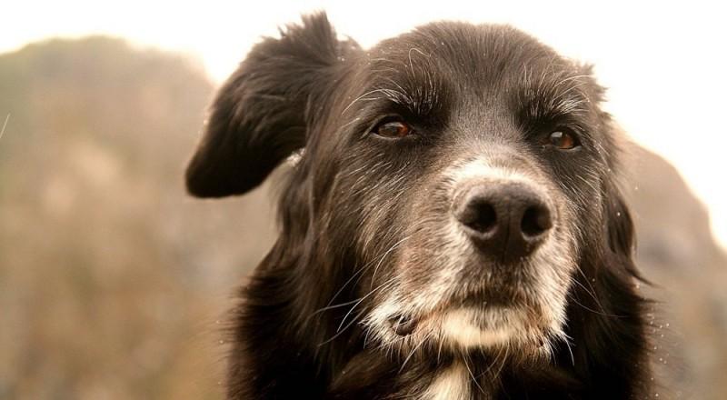 comune-rimborsa-adozione-cane-adulto