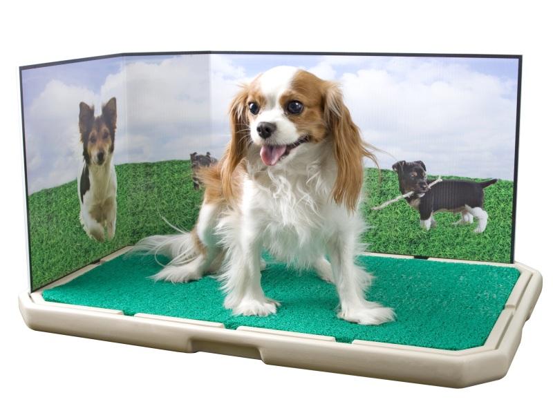 Dog toilet l 39 assurdit di una lettiera per il cane for Recinto cani fai da te