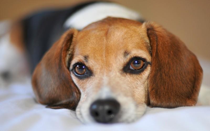cane-non-piange