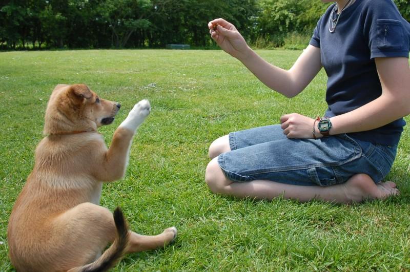educazione-cane