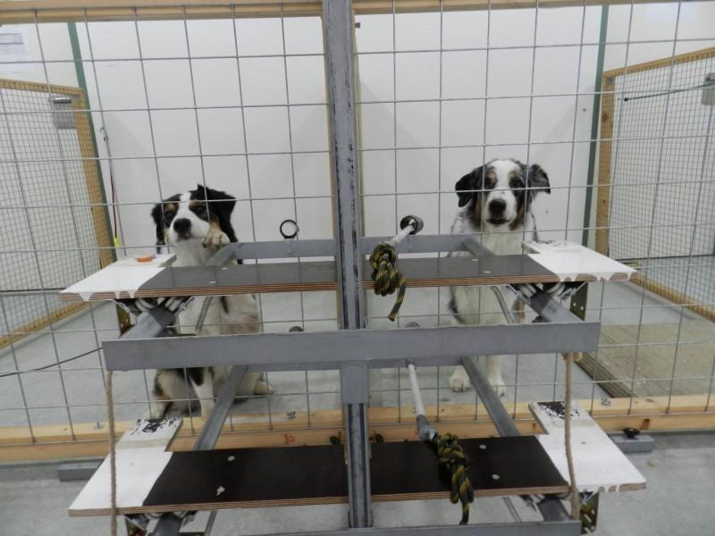 esperimento-cani-altruisti