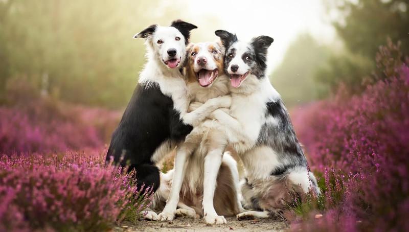 studio-cani-altruisti