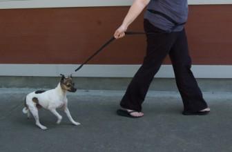 Il cane vuole tornare subito a casa o non vuole proprio uscire