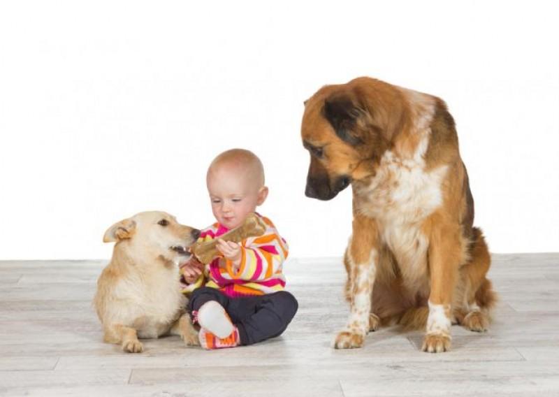 Il cane può provare gelosia?