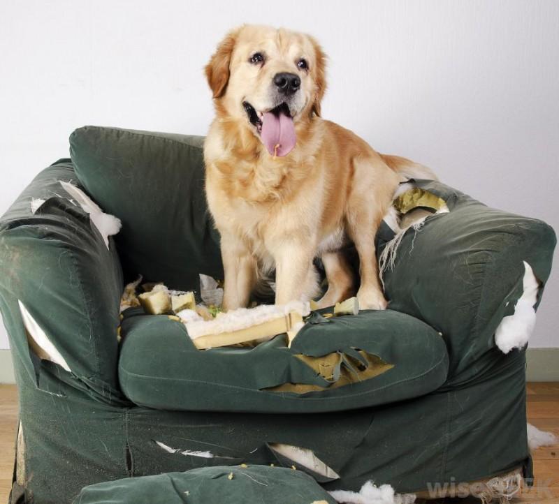 cane-divano-distrutto