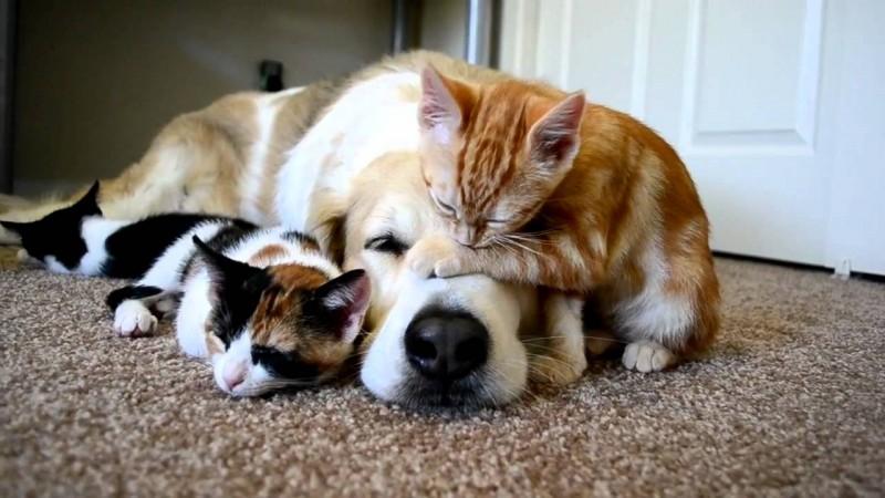 cane-dorme-gatti