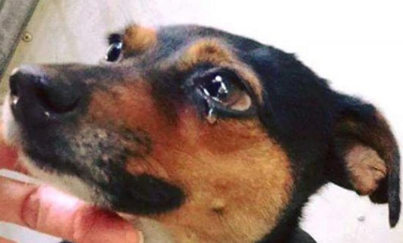 Risultati immagini per cane che piange