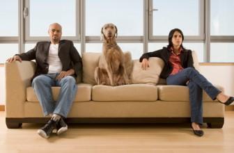 A chi va il cane in caso di separazione o divorzio?
