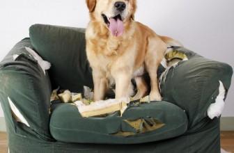 Comportamento distruttivo nel cane