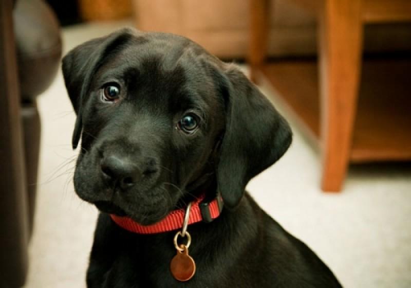 La medaglietta identificativa del cane: accessorio indispensabile