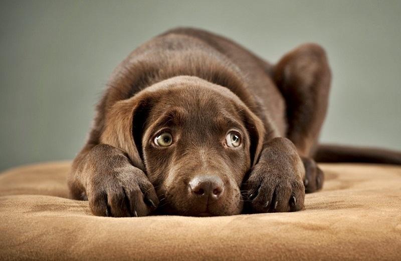 Quando il cane non vuole essere accarezzato