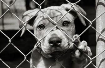 5 miti da sfatare se adotti un cane da un canile-rifugio