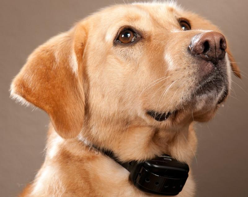 collare-antiabbaio-cane