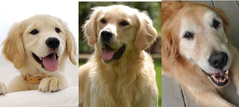 Adottare un cucciolo o un cane adulto? Pro e contro