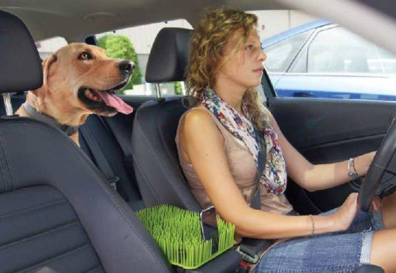 La griglia divisoria per il cane in auto