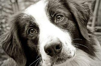 Quanto le nostre emozioni influenzano il cane