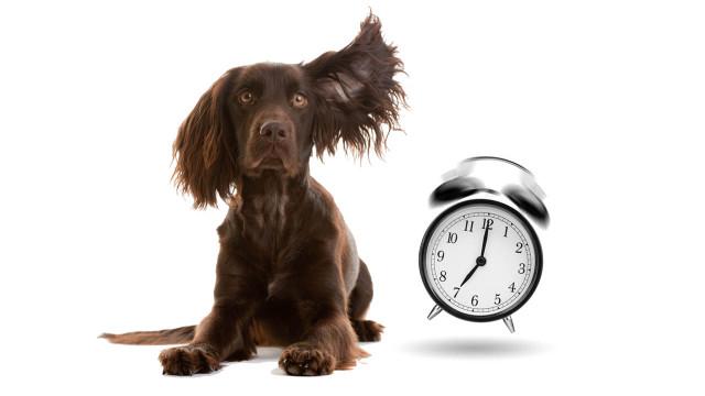 tempo-cane