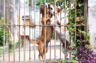 L'aggressività rediretta del cane