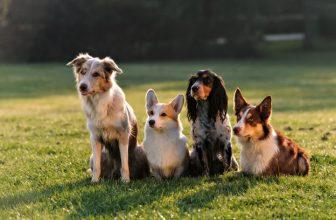 Nomi per Cani: 1000 idee per Scegliere il Nome del Cane
