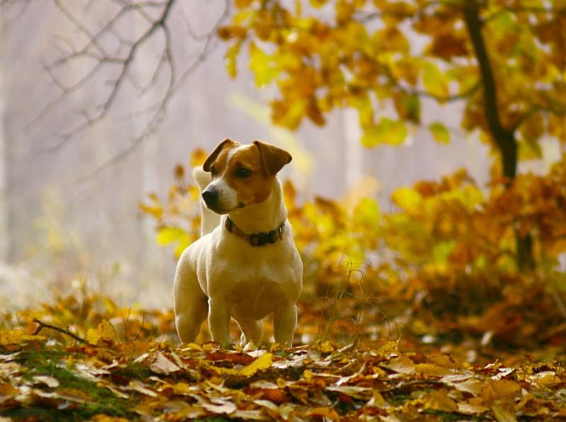 cane-campagna