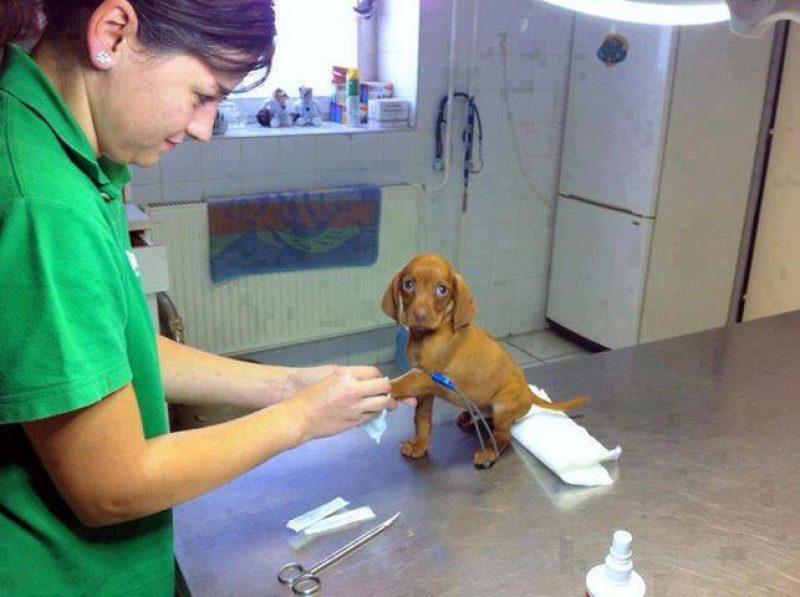 cucciolo-veterinario