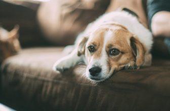 Consigli per ridurre l'ansia da separazione nel cane quando si esce di casa
