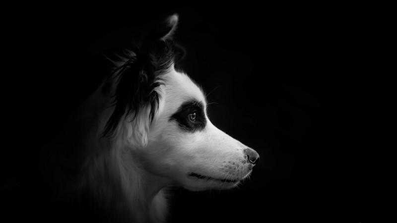 cane-buio