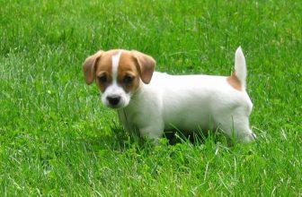 5 cose da fare quando arriva un cucciolo a casa