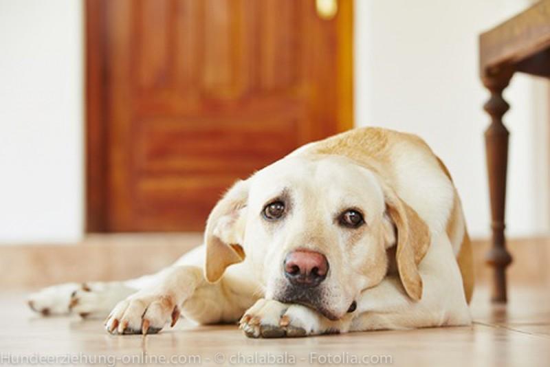 3 (grossi) segnali di stress nel cane