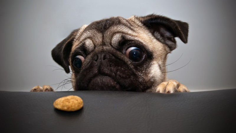 cane-affamato