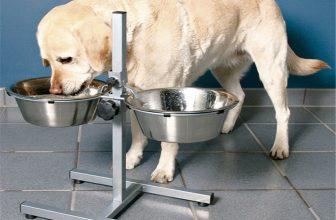 Ciotole per Cani Rialzate da terra: perché Usarle e dove Trovarle
