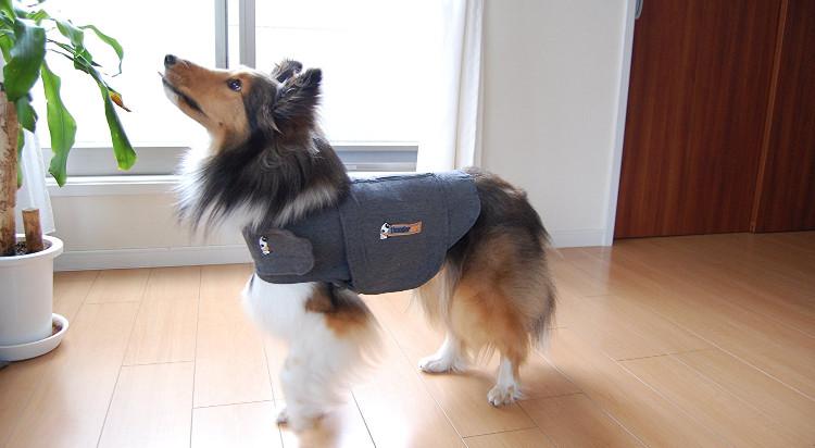 thundershirt-maglietta-anti-ansia-per-cani
