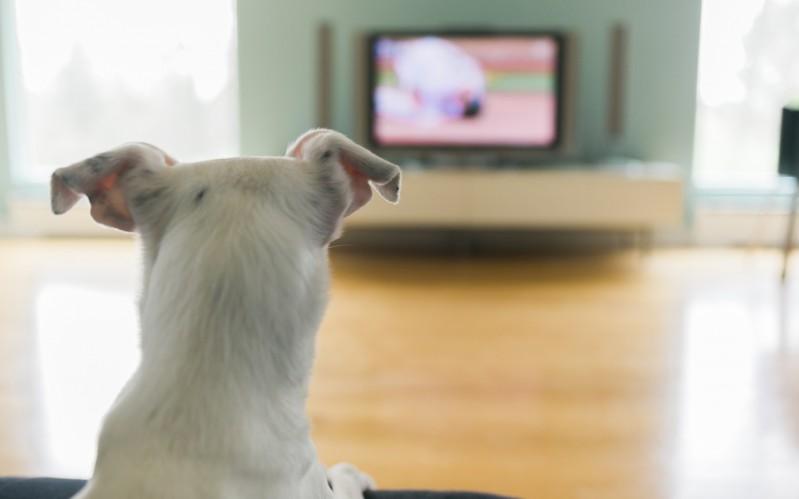 cane-guarda-tv