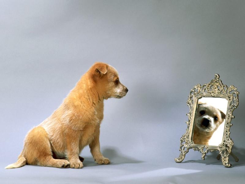 cane-specchio