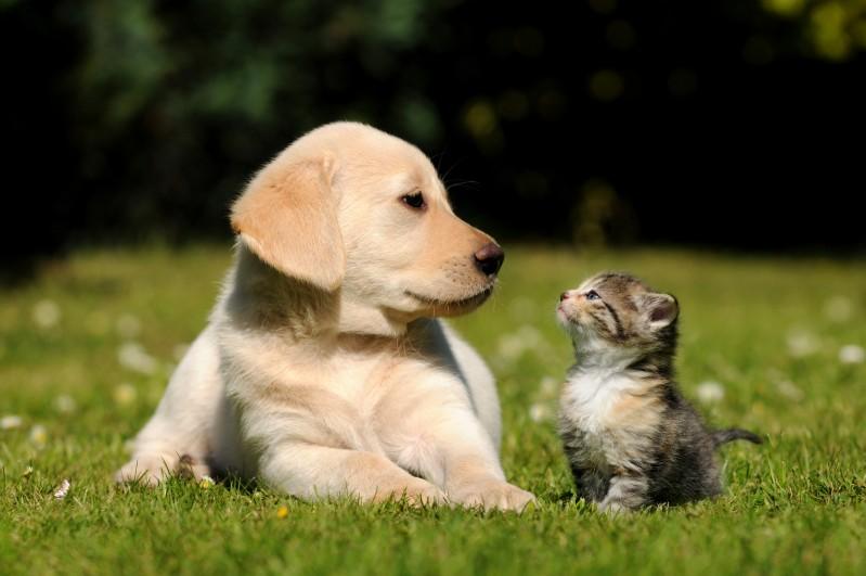 cane-gatto
