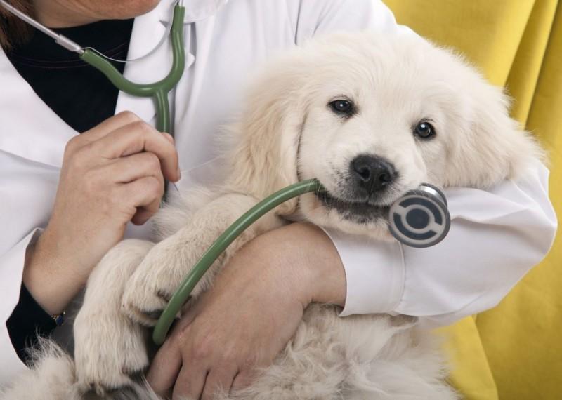 cane-veterinario