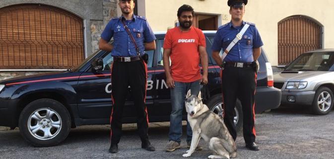 Husky rubato e ritrovato dai Carabinieri: Ladri denunciati