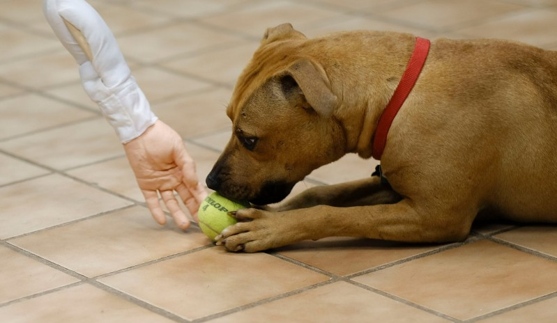 Ridicolo test di pericolosità per il cane