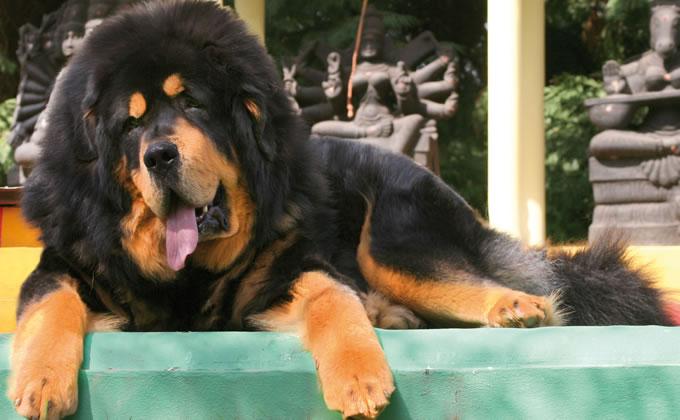 Usa: un giudice impone il taglio delle corde vocali ad un gruppo di cani