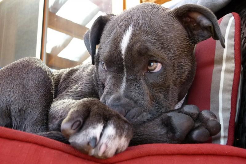 condannato-tortura-cane