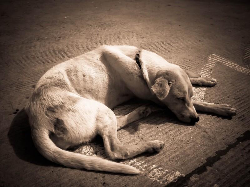 trasferita-abbandona-cane