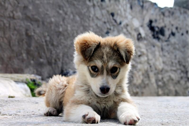 quanti-cani-in-italia