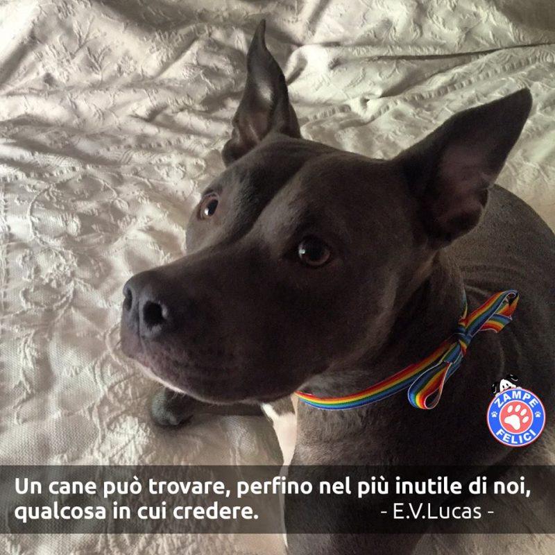 Frasi Sui Cani Le Più Belle Citazioni Di Sempre