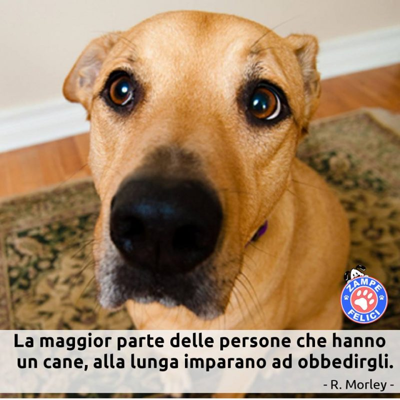 Frasi Sui Cani Trovati.Frasi Sui Cani Le Piu Belle Citazioni Di Sempre