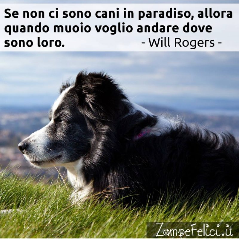 Frasi Sui Cani Le Piu Belle Citazioni Di Sempre